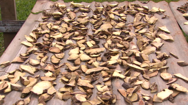 Chopped kava root on table made of corrugated iron in village of Vunidogoloa Fiji