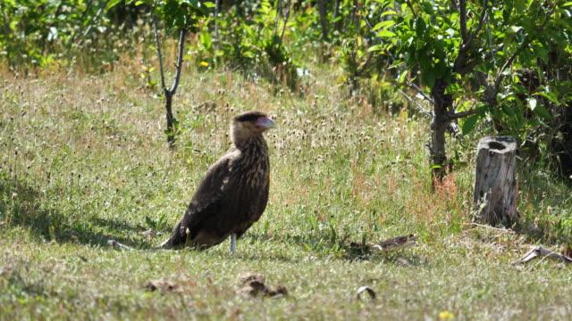 christina hacienda - biodiversity stock videos & royalty-free footage