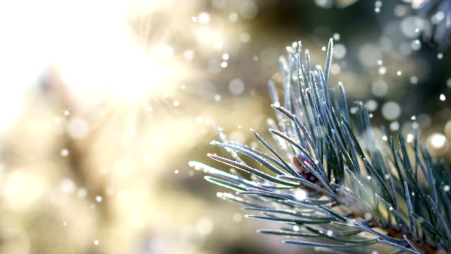 christmas card (loop 4k) - snow with glitter effect. - pine tree stock videos & royalty-free footage