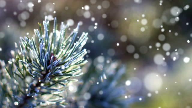 vídeos de stock e filmes b-roll de christmas card (loop 4k) - snow with glitter effect. - pinheiro
