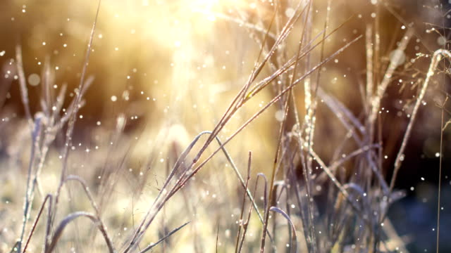 クリスマスカード(ループ4k) - グリッター効果の雪。 - 枝点の映像素材/bロール