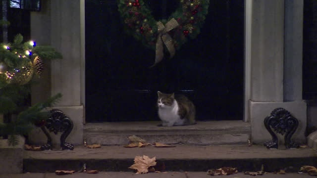 Christmas decorations and Larry the Cat outside 10 Downing Street
