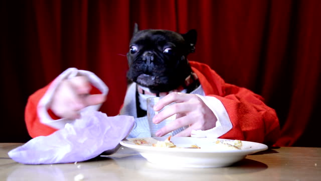Christmas dog eating with hands