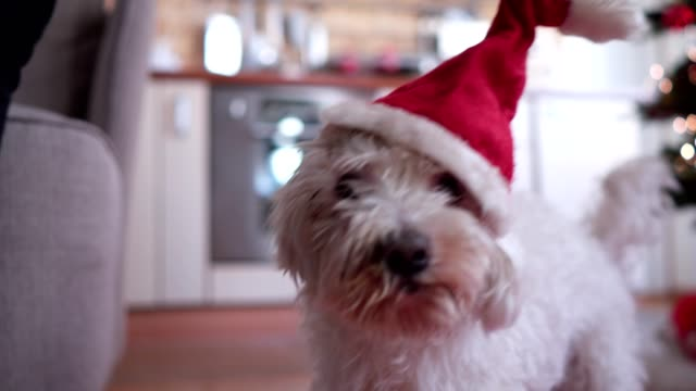 christmas dog - hat stock videos & royalty-free footage