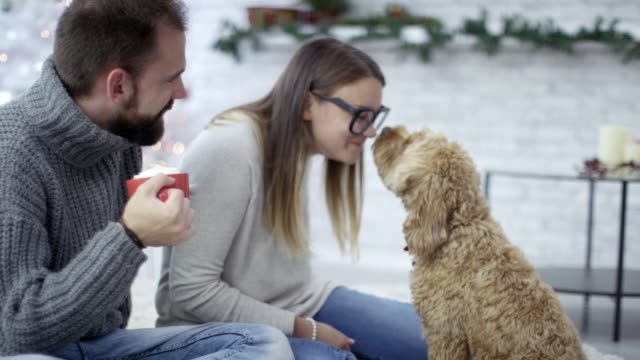 christmas kisses from pet dog - kissing stock videos & royalty-free footage