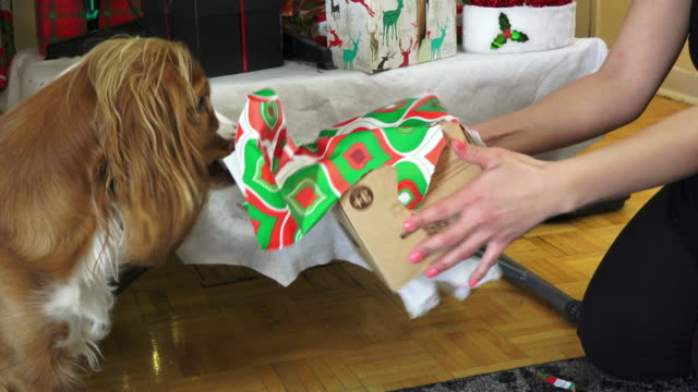 christmas traditional event: real life family opening gifts on december - unwrapping stock videos and b-roll footage