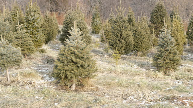 christmas tree farm scenery - evergreen stock videos & royalty-free footage