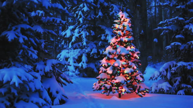 Christmas tree glowing in forest