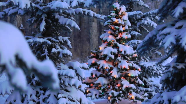 vídeos de stock, filmes e b-roll de árvore de natal brilhantes em floresta - decoração de natal