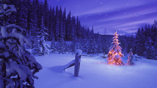 christmas tree glowing outdoors in a snowy forest - 20 seconds or greater stock videos & royalty-free footage