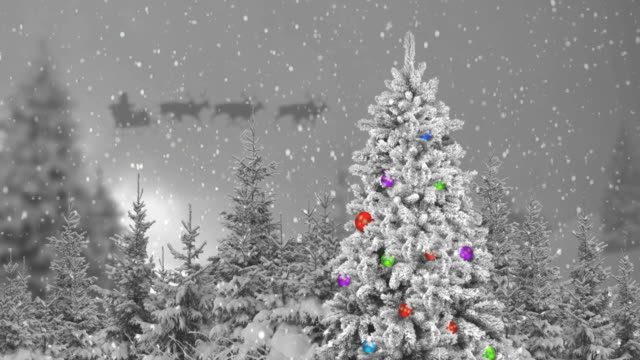 christmas tree in the forest and santa claus - sledge stock videos & royalty-free footage