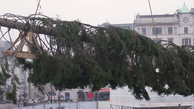 christmas tree is erected at trafalgar sq on november 30, 2020 in london, england. norway have donated a tree to london from the nordmarka forest... - christmas tree lighting ceremony stock videos & royalty-free footage