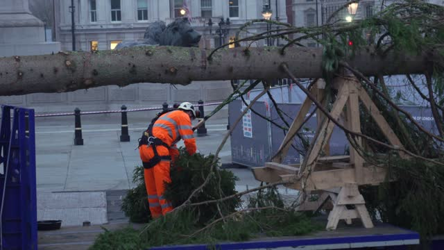 christmas tree is erected at trafalgar sq on november 30, 2020 in london, england. norway have donated a tree to london from the nordmarka forest... - man made stock videos & royalty-free footage