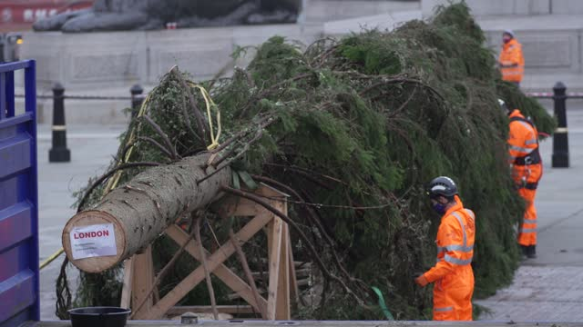 christmas tree is erected at trafalgar sq on november 30, 2020 in london, england. norway have donated a tree to london from the nordmarka forest... - {{ collectponotification.cta }} stock videos & royalty-free footage