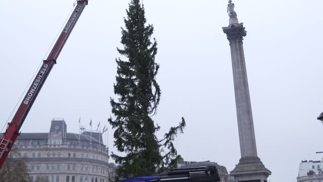 christmas tree is erected at trafalgar sq on november 30, 2020 in london, england. norway have donated a tree to london from the nordmarka forest... - city stock videos & royalty-free footage