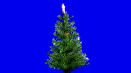 Christmas Tree Isolated Loop