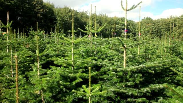 christmas tree nursery - christmas tree stock videos & royalty-free footage