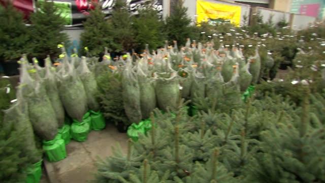 christmas tree sale - christmas tree stock videos & royalty-free footage