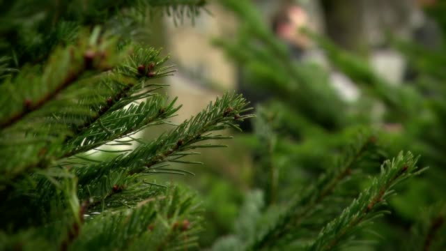 christmas tree sale - ago parte della pianta video stock e b–roll