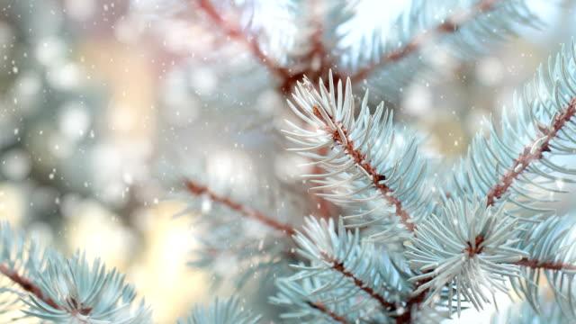 hd: christmas tree - pinaceae stock videos & royalty-free footage