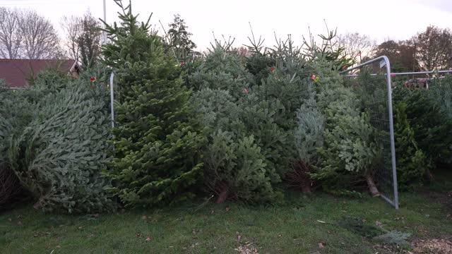 GBR: Christmas Tree Farms