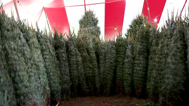 Christmas tree's at a Holiday Sale Christmas Tree lot on November 29 2018 in Miami Florida Reports indicate that the US is suffering from a Christmas...