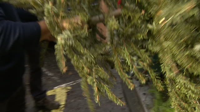 christmas trees being recycled in january - christmas decoration stock videos & royalty-free footage