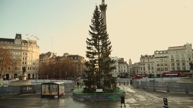 christmas trees in central london - day stock videos & royalty-free footage