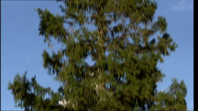 trafalgar square spruce erected/ advice on caring for domestic trees low angle view of tree tilt up workmen on cherry picker at top of tree - spruce stock videos & royalty-free footage