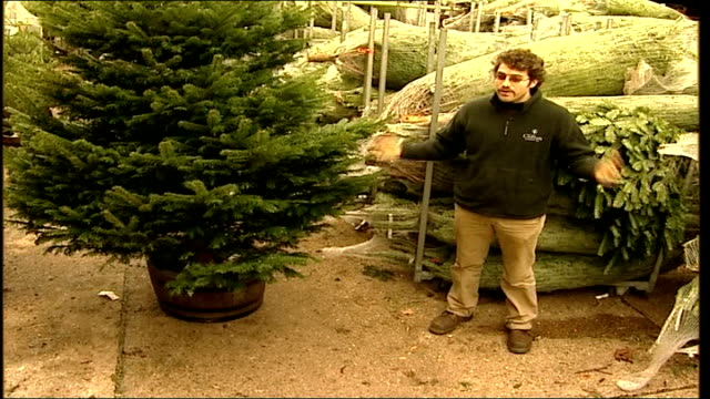 trafalgar square spruce erected/ advice on caring for domestic trees guy bullen interview sot on caring for christmas trees - pinacee video stock e b–roll