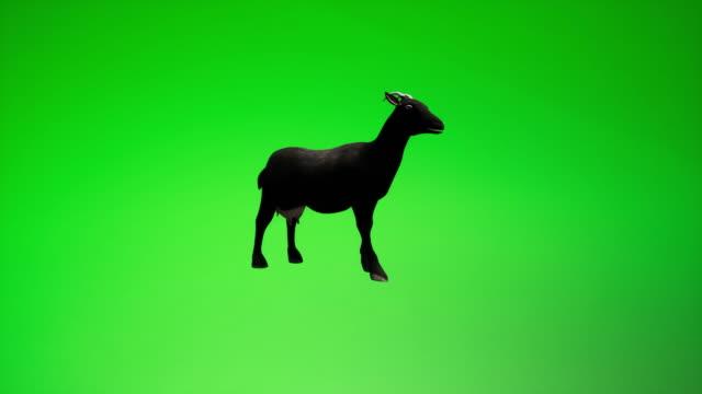chroma-schlüssel zu goat black - tropical climate stock-videos und b-roll-filmmaterial
