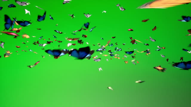 chroma key too much butterflies - butterfly stock videos & royalty-free footage