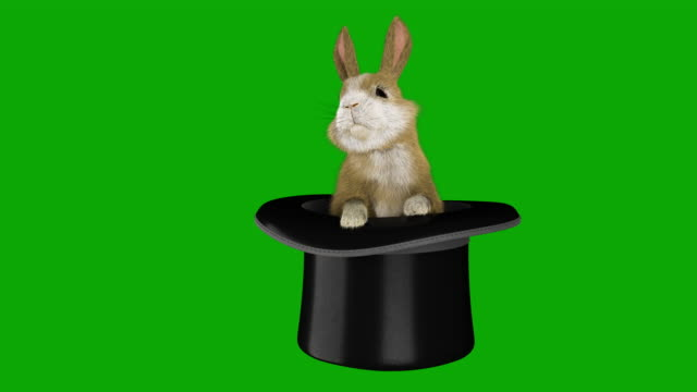chromakey baby rabbit coming out of a magician's hat - animal hair stock videos & royalty-free footage