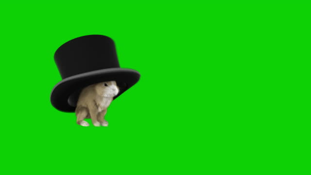 chromakey baby rabbit  running away with a magician's hat - top hat stock videos & royalty-free footage