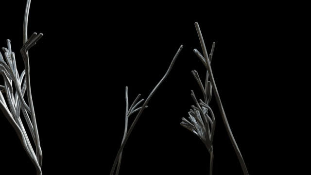 b/w, cgi, chrome strains growing like plant roots against black background - root stock videos & royalty-free footage