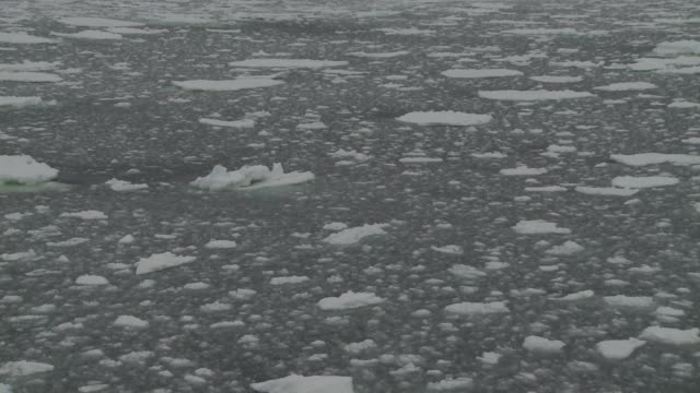 chunks of ice float on the surface of the southern ocean. available in hd. - block shape stock videos & royalty-free footage