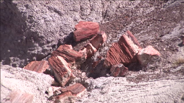 Chunks of petrified wood are scattered on the canyon floor in Petrified Forest National Park, Arizona.