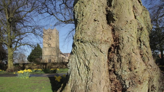Church at Teversal Village & Daffodils (Narcissus), Nottinghamshire, England, UK, Europe