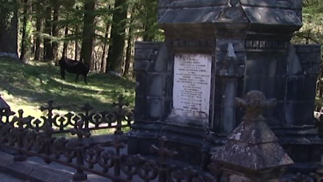 church of st. john, dharamsala. a memorial stone commemorating james bruce, the viceroy of india; erected by mary louisa, his widow. - pinaceae stock videos & royalty-free footage