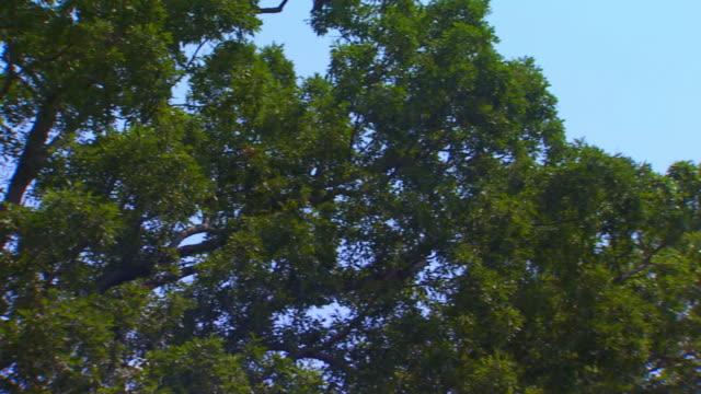 church steeple - steeple stock videos & royalty-free footage
