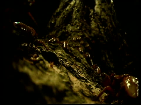 cicada larvae crawl past and up tree trunk - appearance stock videos & royalty-free footage