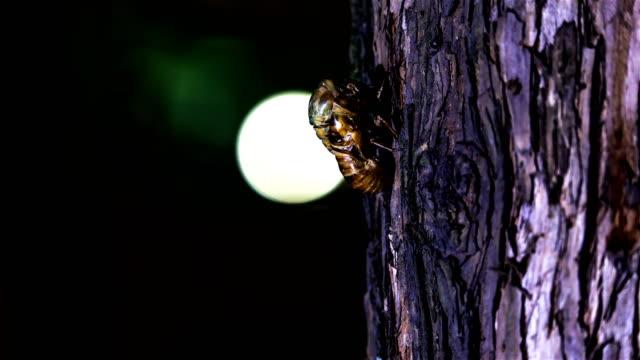cicada molting - south korea stock videos & royalty-free footage