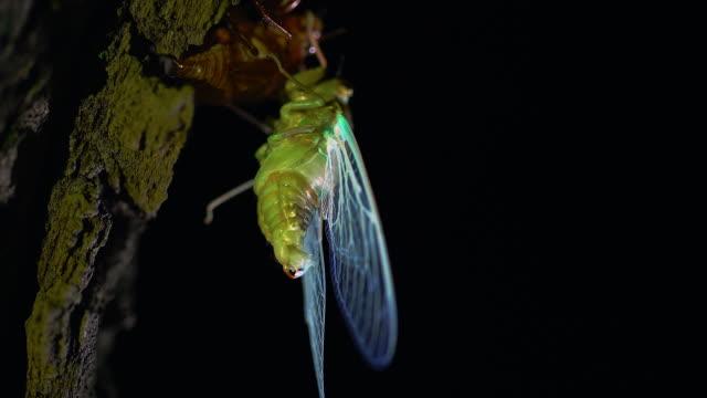 cicada right after molting - 動物の脚点の映像素材/bロール