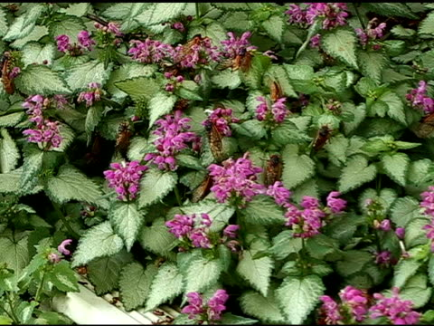 vídeos y material grabado en eventos de stock de cicadas rastreo en flores. toma medio - medium group of animals