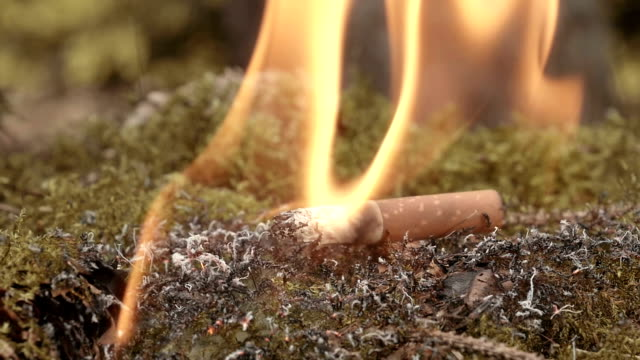cigarette end inflamed fire in dry moss - zigarette stock-videos und b-roll-filmmaterial