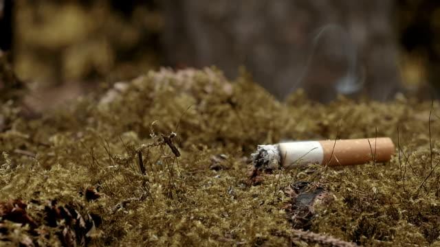 cigarette end inflamed fire in dry moss - zigarettenstummel stock-videos und b-roll-filmmaterial