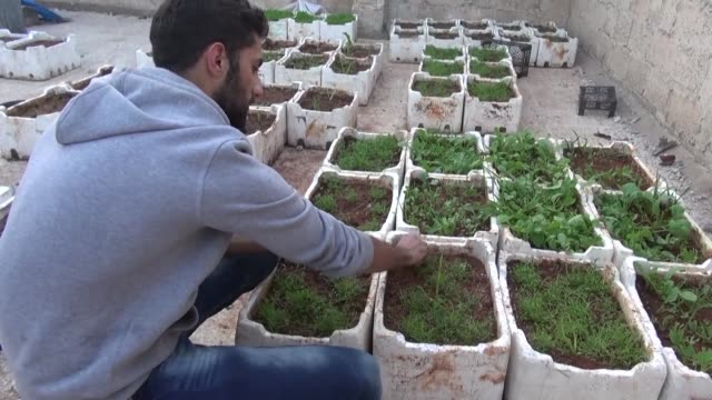 vídeos de stock, filmes e b-roll de cigarettes stuffed with grape leaves instead of tobacco gardens on bombed out rooftops and batteries powered by rusted bicycles in syria's besieged... - característica de construção