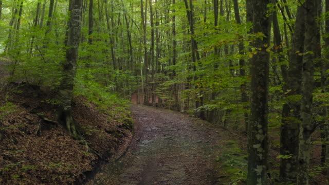 vídeos de stock, filmes e b-roll de vídeo cinematográfico de estrada de terra em uma floresta de faias - faia árvore de folha caduca