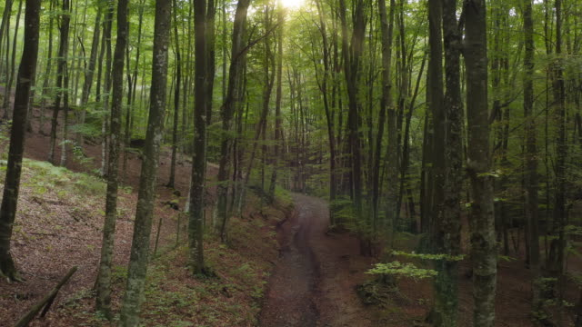vídeos de stock e filmes b-roll de cinematic video of dirt road through idyllic beech forest - trilho