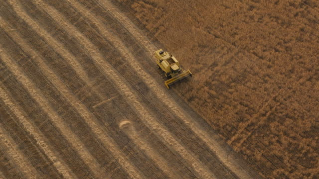 Z/O circling aerial view of combine harvester working in wheat field and truck waiting for loading at edge of field